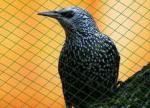 Мрежи за предпазване на овощни растения от птици